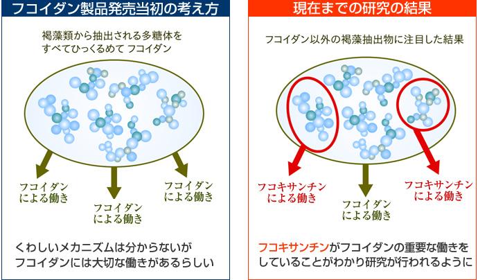 フコキサンチンと癌における低分...